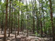 1100 Teakbäume, 8