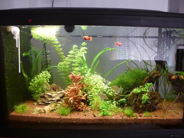 120 liter aquarium mit ohne pflanzen und besatz in schorndorf fische aquaristik kaufen und. Black Bedroom Furniture Sets. Home Design Ideas