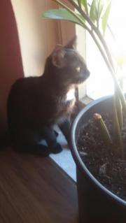 1süßes Katzenbaby sucht