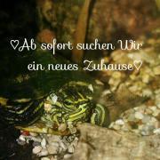 2 Wasserschildkröten + Aquarium