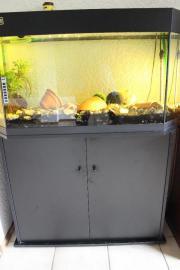 2Kajaks Aquarium Möbel
