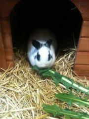 3 nette Kaninchendamen