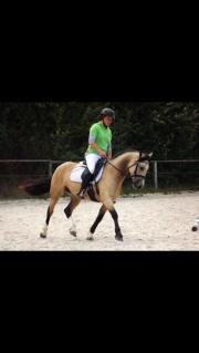 ambitioniertes Pony zur