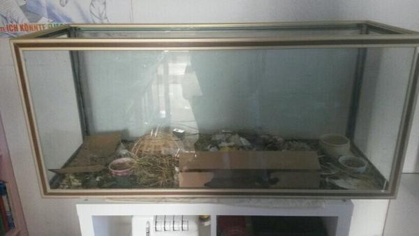 aquarium 100x35x50cm in neustadt fische aquaristik kaufen und verkaufen ber private. Black Bedroom Furniture Sets. Home Design Ideas