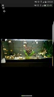 Aquarium 112 liter