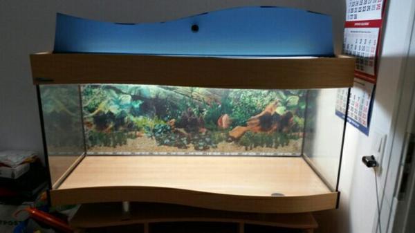 aquarium 240 l kleinanzeigen tiermarkt deinetierwelt. Black Bedroom Furniture Sets. Home Design Ideas