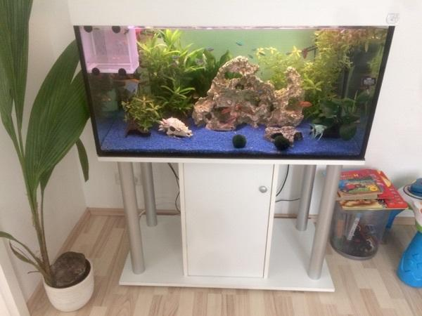 aquarium 250 liter komplett mit fischen und zubeh r in. Black Bedroom Furniture Sets. Home Design Ideas