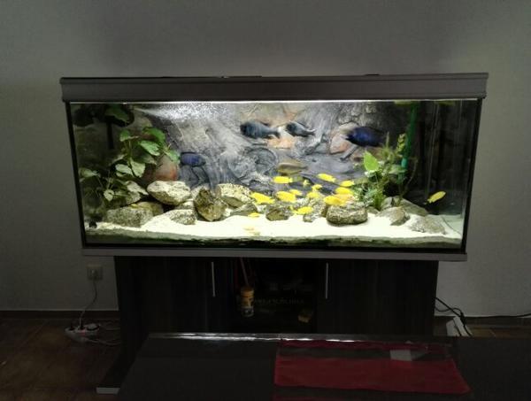 aquarium 450 liter 2 aussenfilter heizstab led beleuchtung besatz inklusive zum verkaufen in. Black Bedroom Furniture Sets. Home Design Ideas