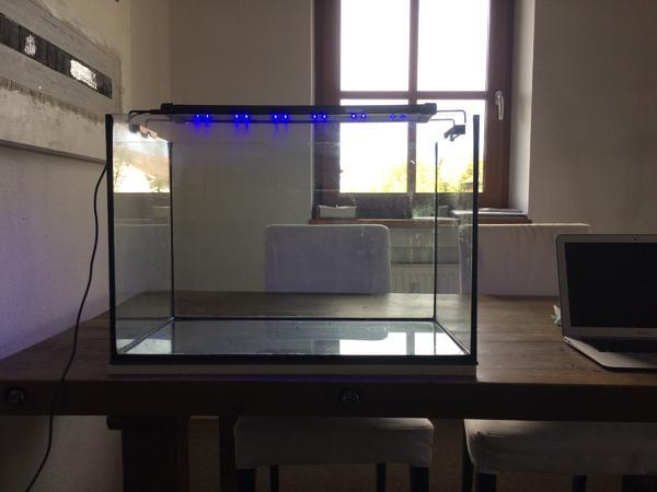 neonr hre kleinanzeigen kaufen verkaufen bei deinetierwelt. Black Bedroom Furniture Sets. Home Design Ideas