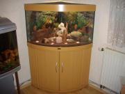 Aquarium Eckaquarium Juwel