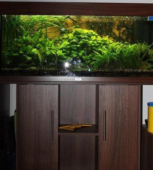 aquarium fische zubeh r in berlin kaufen bei deine. Black Bedroom Furniture Sets. Home Design Ideas