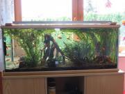 Aquarium Juwel Halbrahmenbecken