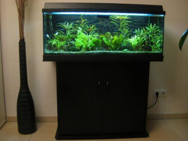 aquarium juwel rio 180 ma e 100 cm 40 cm in burglengenfeld fische aquaristik kaufen und. Black Bedroom Furniture Sets. Home Design Ideas