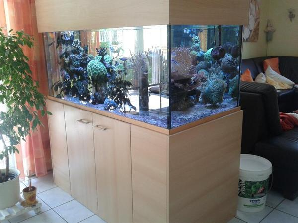 aquarium raumteiler neu und gebraucht kaufen bei. Black Bedroom Furniture Sets. Home Design Ideas