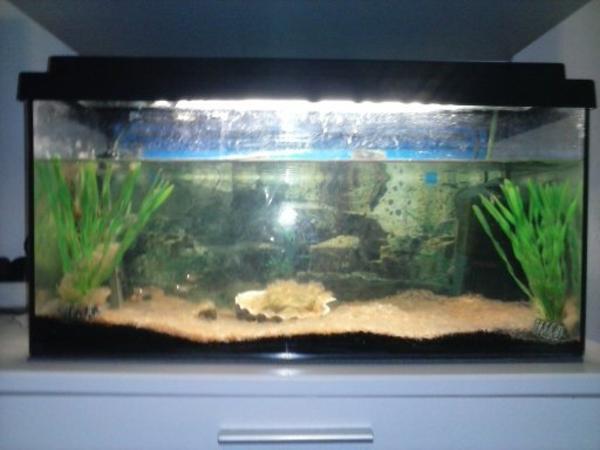 aquarium mit fische in salzburg fische aquaristik. Black Bedroom Furniture Sets. Home Design Ideas