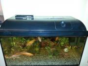 Aquarium mit Goldfische