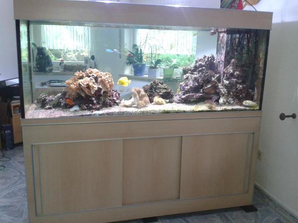 Aquarium salzwasser in frankenthal fische aquaristik for Salzwasser aquarium fische