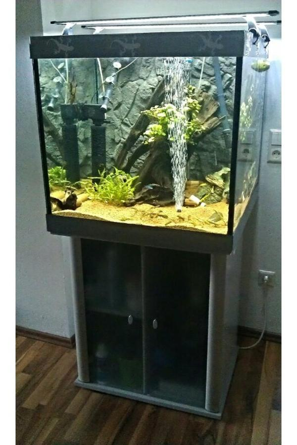 Aquariumaufl sung w rfelaquarium for Schrank 60x60x60