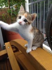 Baby Katze (weiblich)