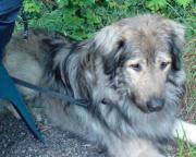 Biete liebevolle Hundebetreuung /