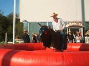 Bullriding, Rodeostier mieten