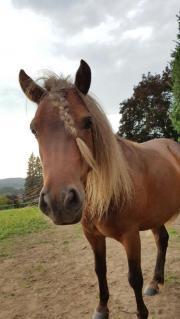 Classic Pony Classic Pony, Wallach, Farbe: Fuchs, Beistellpferd. Sehr hübscher, leider etwas ängstlicher ... 500,- D-64668Rimbach Heute, 20:57 Uhr, Rimbach - Classic Pony Classic Pony, Wallach, Farbe: Fuchs, Beistellpferd. Sehr hübscher, leider etwas ängstlicher