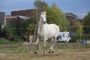 Eyman, reiner Berber,