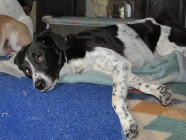Familienmitglied gesucht in baden baden hunde kaufen for Quoka baden baden