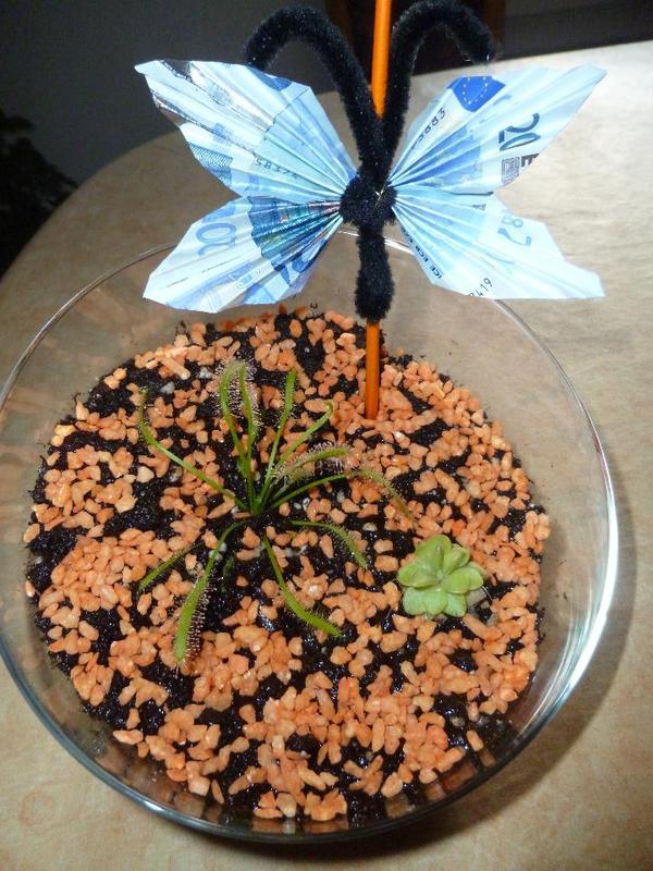 fleischfressende pflanzen geschenkidee geldgeschenk. Black Bedroom Furniture Sets. Home Design Ideas