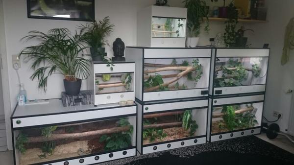 Forex terrarium zu verkaufen