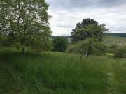 Garten/Stückle/Obstbaumwiese