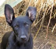 Greta, 9 Monate