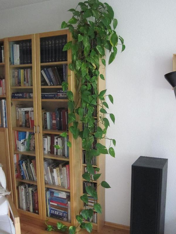 efeu neu und gebraucht kaufen bei. Black Bedroom Furniture Sets. Home Design Ideas