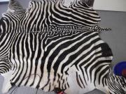 gut erhaltenes Zebrafell