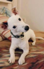 Hund / Welpe als
