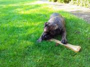 Hundesitter Hundebetreuer Tierbetreuung
