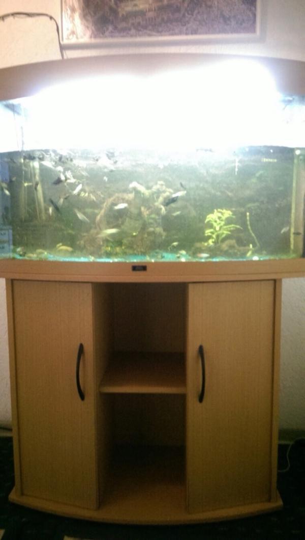 juwel aquarium neu und gebraucht kaufen bei. Black Bedroom Furniture Sets. Home Design Ideas