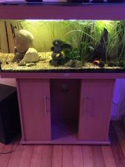 Juwel Aquarium 180