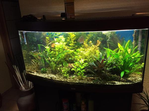 juwel vision 260 in tisheim fische aquaristik kaufen und verkaufen ber private kleinanzeigen. Black Bedroom Furniture Sets. Home Design Ideas