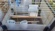 Käfig für Vögel