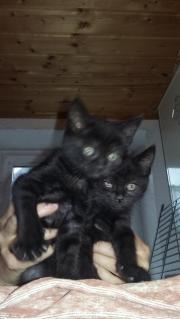 Kätzchen zu vermitteln