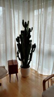 Kaktus / Euphorbie zu