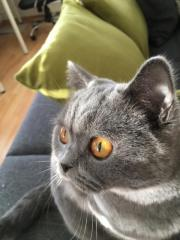 Katze 1-3