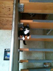 Katze Lilly wird