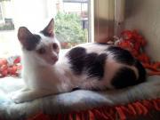 Katze Mimi * Katzenhilfe