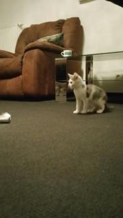Katze zu verschenken
