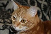 Katzen Mica und