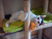 Katzenanimateure gesucht**