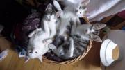 Katzenkinder in gute