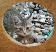 Katzenmädchen Chilli sucht